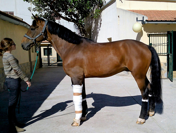 Traumatología caballo Hospital Veterinario