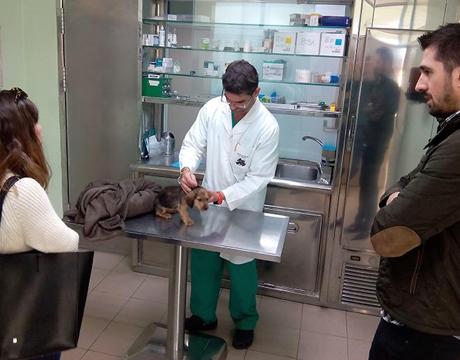 Revisión veterinaria cachorro