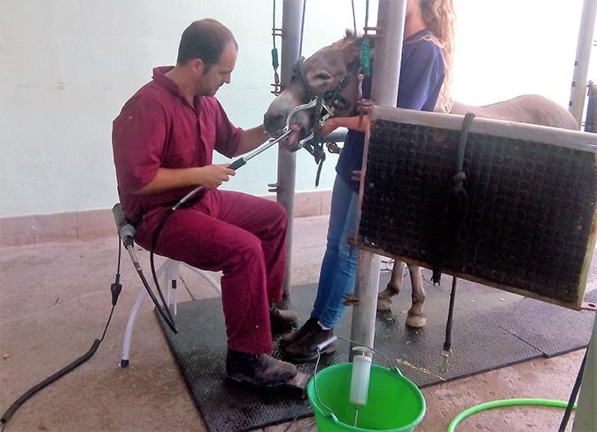 Odontología caballo Hospital Veterinario