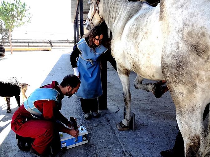 Radiografía caballo Hospital Veterinario
