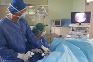 Castración o esterilización de perras y gatas mediante laparoscopia