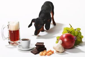 intoxicacion perro y gato