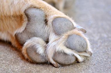 almohadilla perro