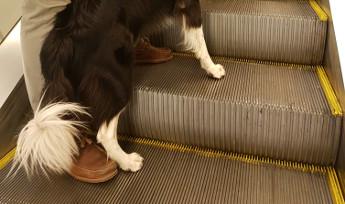 Los peligros de los perros en las escaleras mecánicas